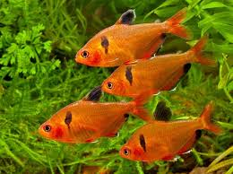 1353 best fish fish fish images on fish fish tropical