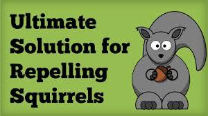 amazing squirrel repellent best way to repel squirrels