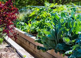 5 of the best fall vegetables for your raised garden bed garden club