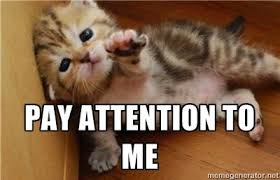 Attention Meme - pay attention to me meme google search 3 pinterest pay