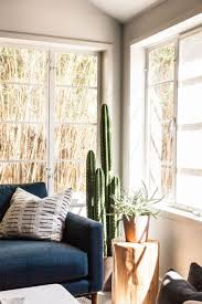 best 25 indoor cactus ideas on pinterest cactus house plants