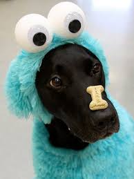 in costumes special scary pet costumes pet