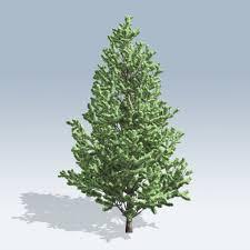 scotch pine christmas tree christmas scotch pine v6 speedtree
