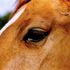 Are Horses Color Blind Horse Vision And Eyesight Expert Advice On Horse Care And Horse