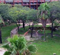 review animal kingdom lodge kidani village