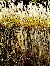 how to use ornamental grasses in midwest gardens midwest living