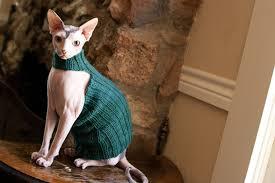 sphynx sweaters bean sphynx sweater