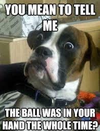 Funny Dog Face Meme - funny dog memes 17