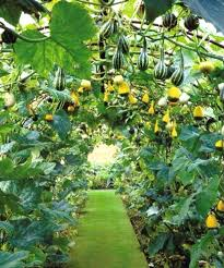 Fruit And Vegetable Garden Layout Fruit And Vegetable Garden Designs Redoubtable Vertical Vegetable