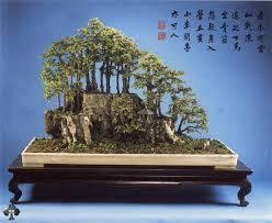top 10 penjing trees bonsai empire