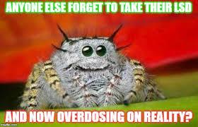Spider Meme Misunderstood Spider Meme - image tagged in misunderstood spider imgflip