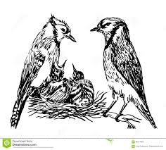 drawing a pair of forest birds in the nest feeding hand