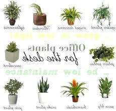 Best Flowers For Office Desk Best Desk Plants Dynamicpeople Club