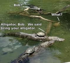 Alligator Memes - top memes 7 we said bring your alligator