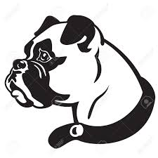 dog head boxer breed black and white vector picture isolated