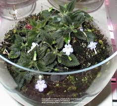Plants To Keep In Bathroom How To Create Humidity For Your Houseplants Garden Org
