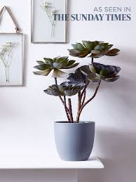 decorative indoor plants 33 best plants images on pinterest john lewis lilies and