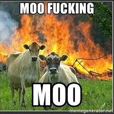 Moo Meme - moo fucking moo evil cows meme generator