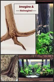 best 20 driftwood for aquarium ideas on pinterest 1 gallon fish sandblasted premium manzanita for aquariums aquascapes reptiles home decor driftwood