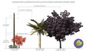 power line safe tree choices houston tx by glenwood weber