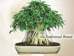shop online plants in surat wholesale garden plants nursery india
