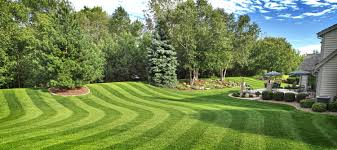 home decor daily lawn care high end premium lawn services