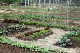 fall best soil for vegetable gardens best soil for raised