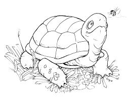 turtle digital stamp freebie happy saturday stamps digi