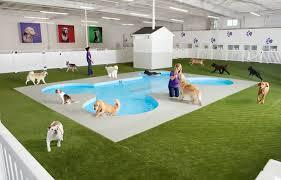 Canine Creature Comforts Creature Comforts Ark Luxury Terminal For Animal Passengers