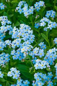 492 best plant and garden colours blue images on pinterest