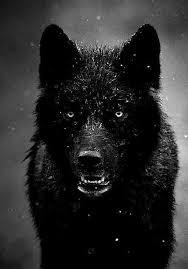 imagenes sorprendentes de lobos imagen relacionada animales pinterest lobos imagenes