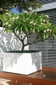 extra large planters u2013 frangipani u2026 love this idea planted pots