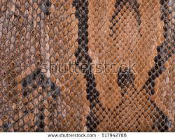 snakeskin texture stock images royalty free images u0026 vectors