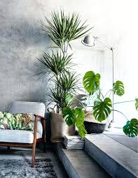best living room plants ideas on apartment plant for modern