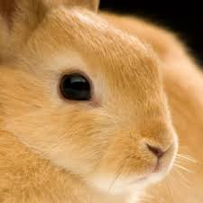 bunnies for easter a pet rabbit for easter is a bad idea