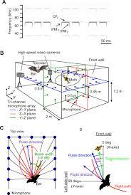 adaptive beam width control of echolocation sounds by cf u2013fm bats