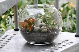 terrarium containers ikea fallcreekonline org