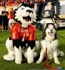 46 best niu images on pinterest alma mater nostalgia and
