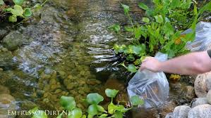 Fish For Backyard Ponds How To Add Fish To A Backyard Garden Pond Empress Of Dirt