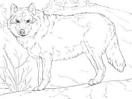 grey wolf coloring free printable coloring pages