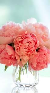Peony Arrangement Best 25 Peonies Ideas On Pinterest Peony Peony Flower And Pink