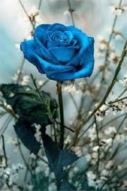 Tiffany Blue Flowers Tiffany Blue Rose Strange Flowers Pinterest Blue Roses