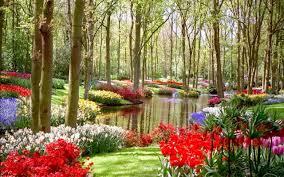 flower flowers flower pond nature garden bouquets beauty