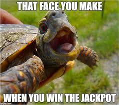 Turtle Memes - that face turtle meme generator imgflip