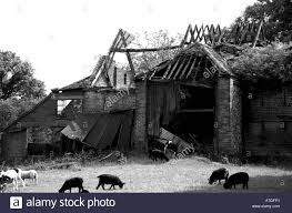 House And Barn by Black And White Image Of A Run Down Old Farm House And