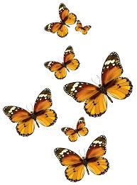 butterflies vector png clipart picture gallery yopriceville