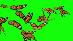 butterfly free 283 free downloads