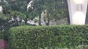 halloween horror nights hurricane matthew topher u0027s blog hhn legacy
