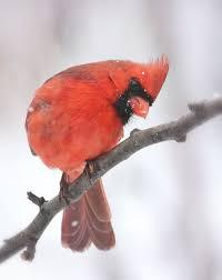 how do birds keep warm in winter garden walk garden talk