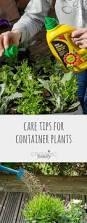 Vegetable Container Garden by 1006 Best Gardening U0026 Garden Crafts Images On Pinterest Learning